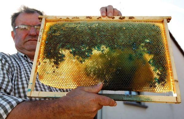 حقائق حول النحل