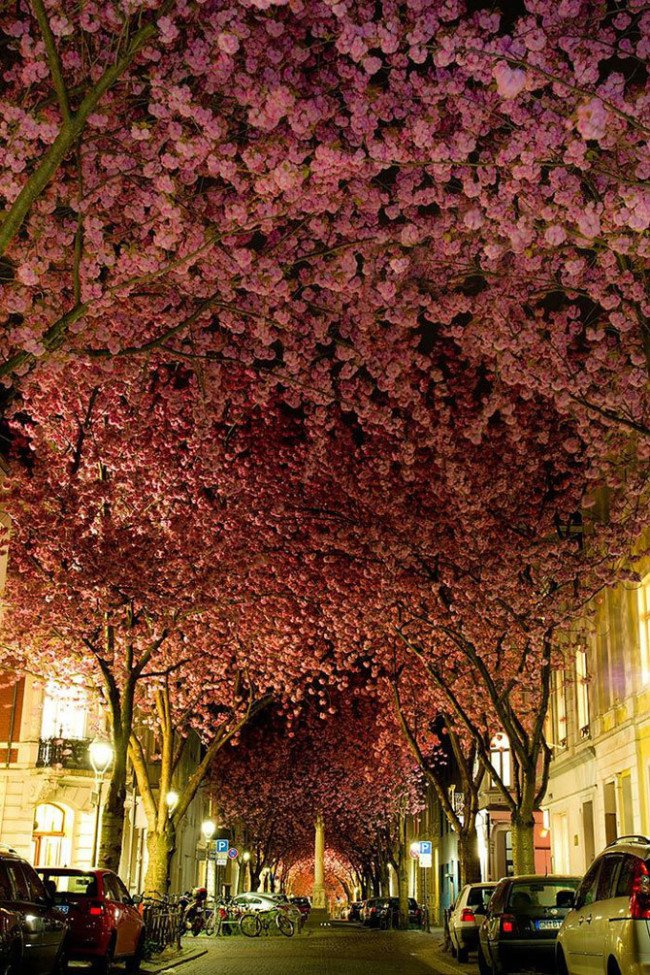 أجمل الشوارع في العالم المغطاة بالزهور والأشجار  بون، ألمانيا
