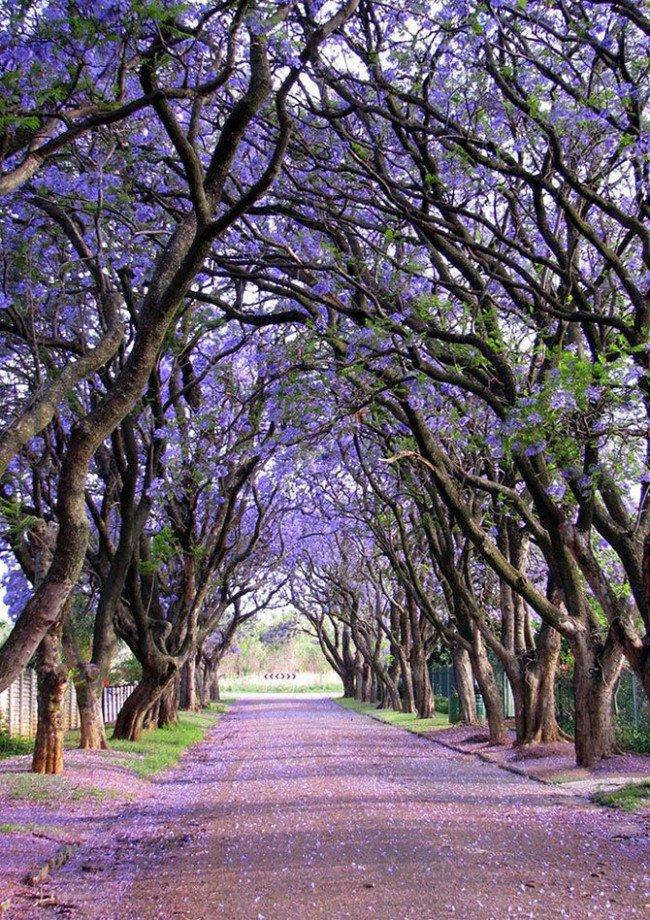 كولينان، جنوب أفريقيا