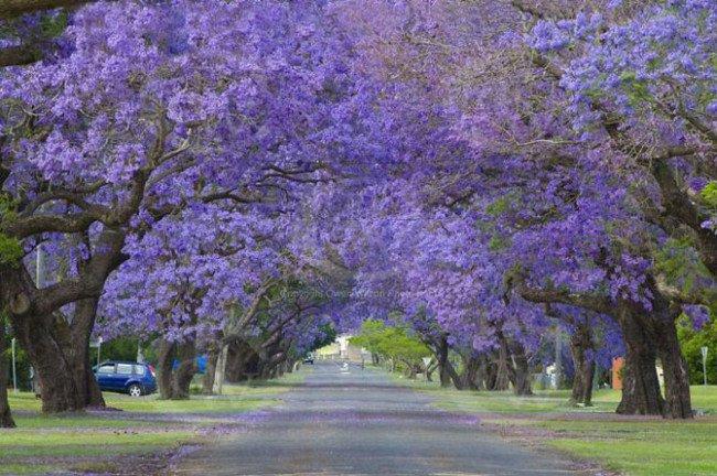 ساوث ويلز، أستراليا