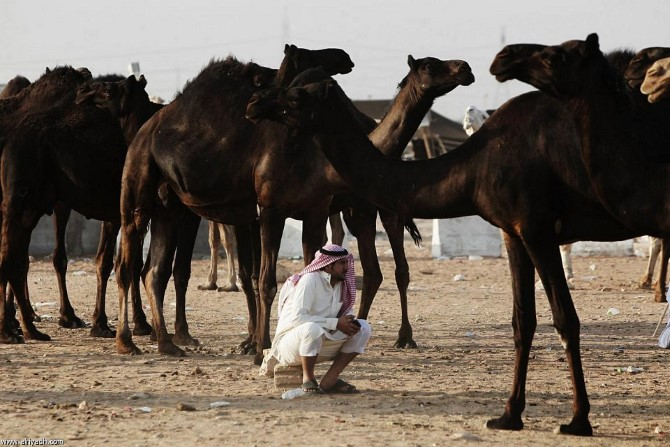 Camel Mall