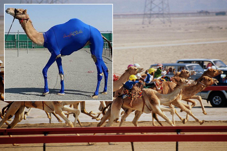 CamelMain