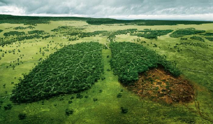 غابات