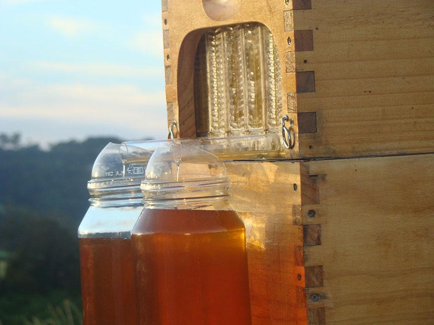 تدفق العسل 2