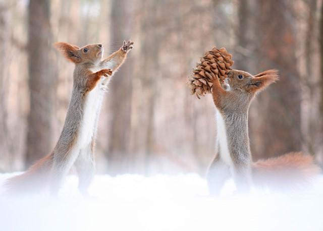 حيوانات في الثلج