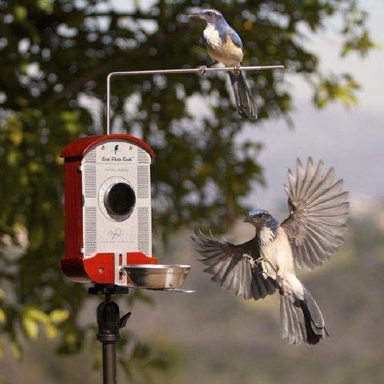 طعام الطيور