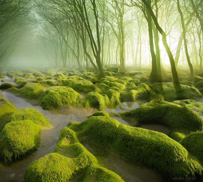 الغابات