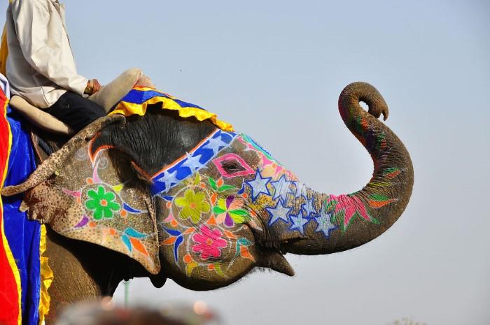 مهرجان الفيلة الملونة