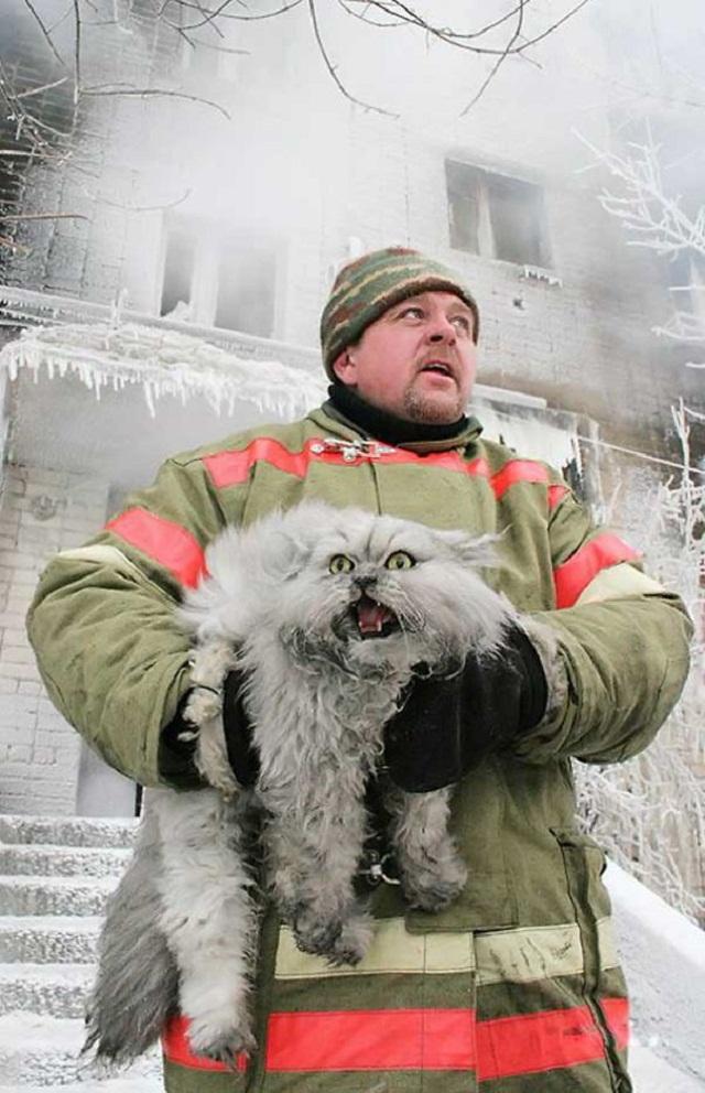 رجل إطفاء ينقذ قطة