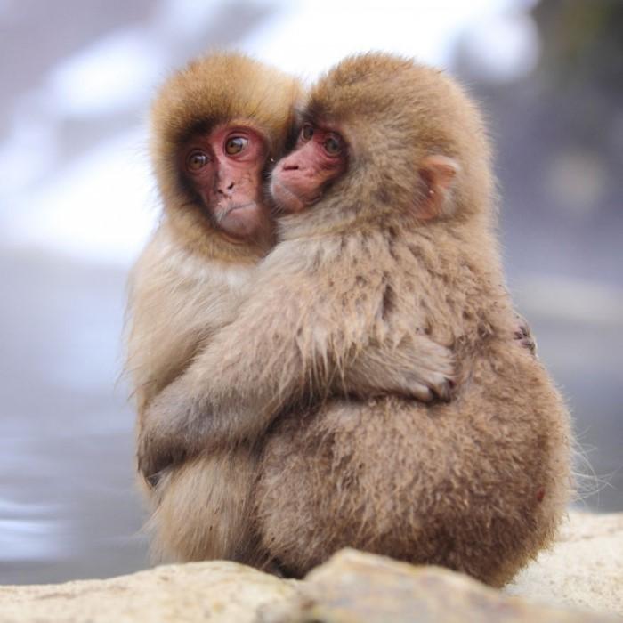 صور جميلة الحيوانات