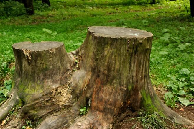 Decatur-Stump-Removal-Service