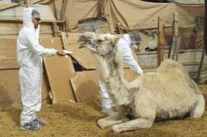 cameld