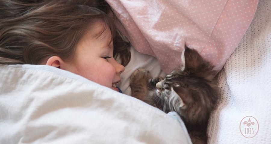النوم مع القط