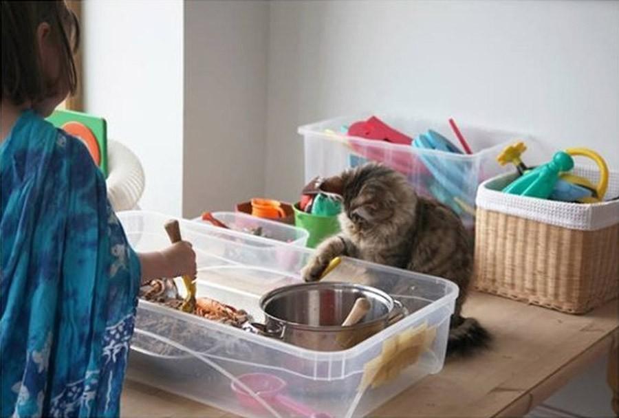 قطة علاجا للتوحد