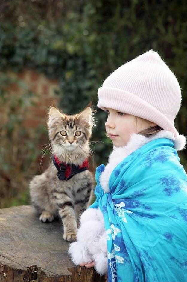 اللعب مع القط