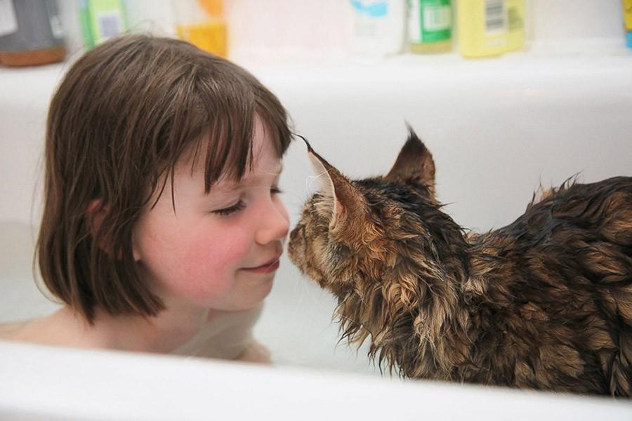 سباحة مع القطة