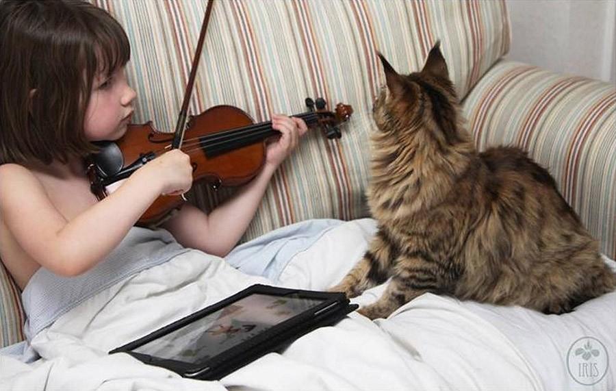 القطط علاج التوحد