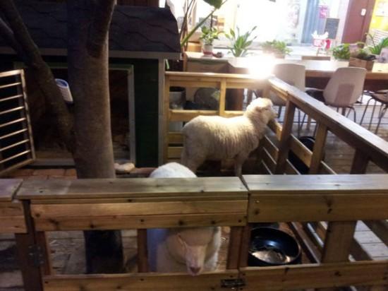 sheep-cafe3