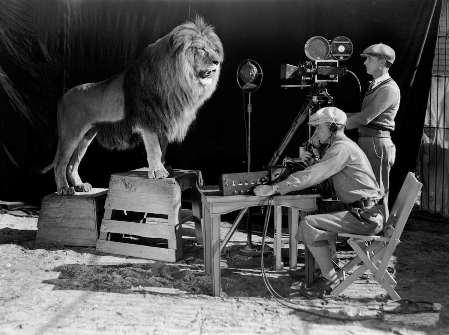 أسد-أفلام-MGM (12)