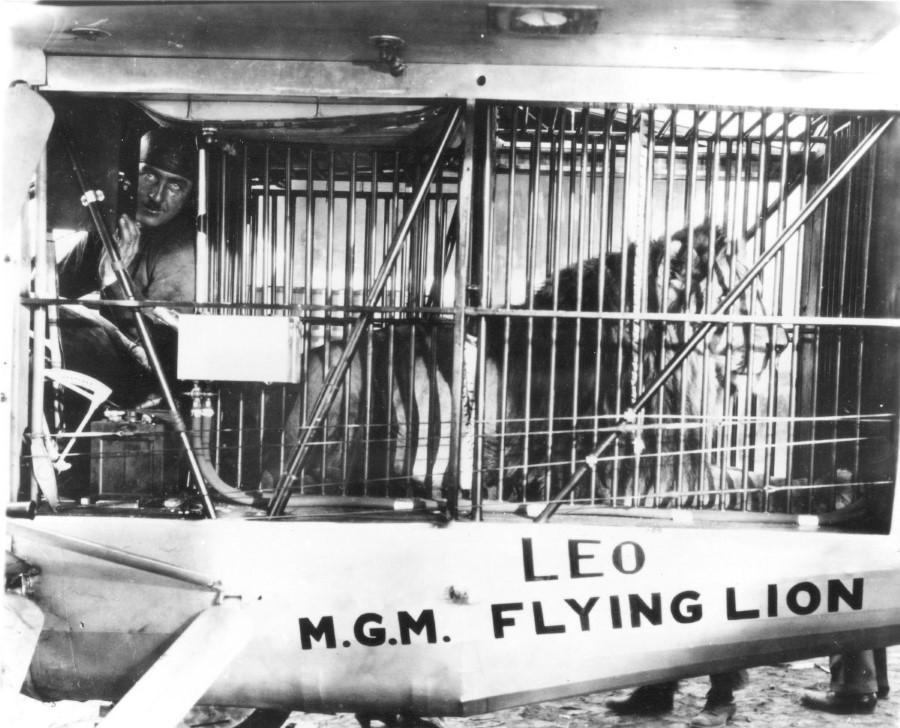 """الأسد """"ليو"""" قبل الإنطلاق في رحلة جوية في عام 1927م"""