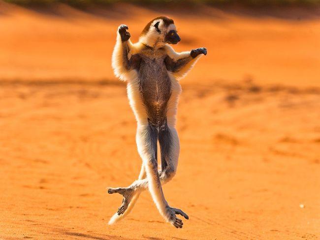 حيوانات في حركات جميلة