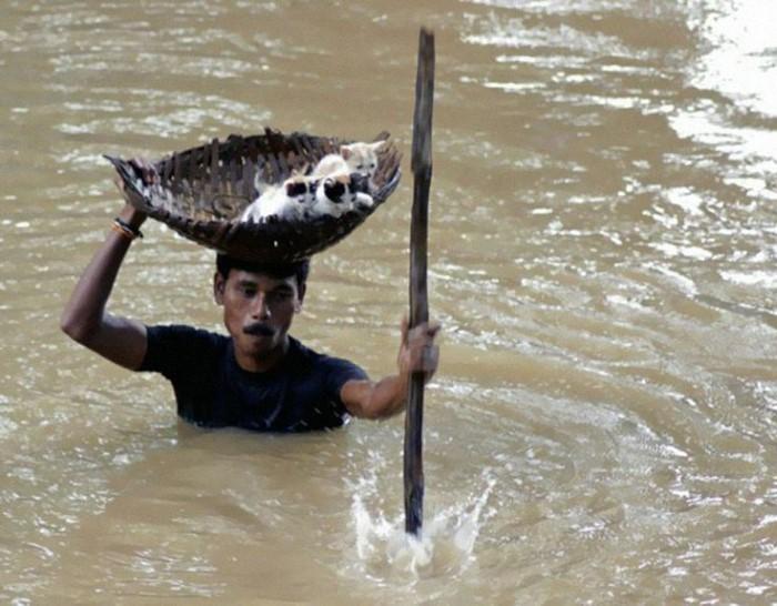 رجل هندي يحمي قططه الصغيرة من فيضان كوتاك