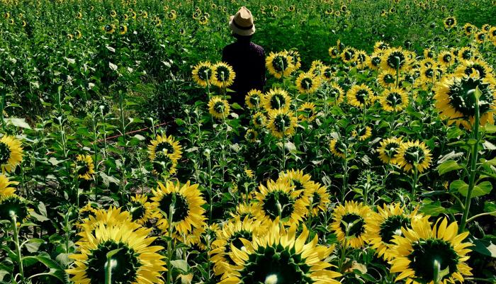 زهور عكس اتجاه الكاميرا