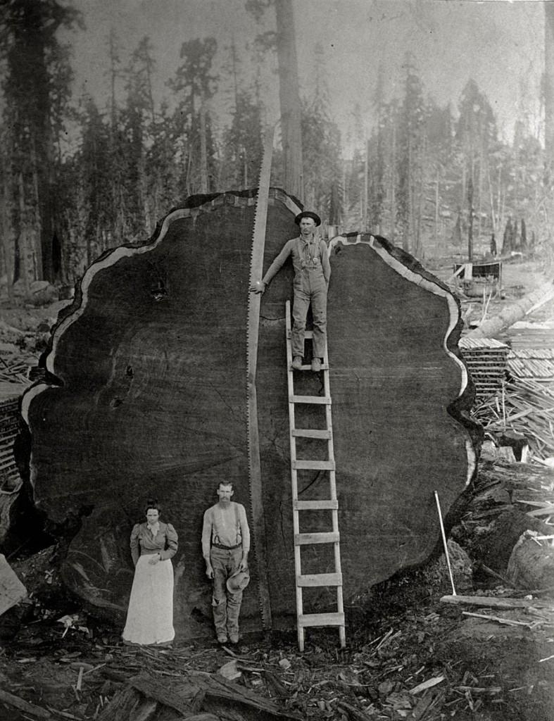 قاطعو الأشجار