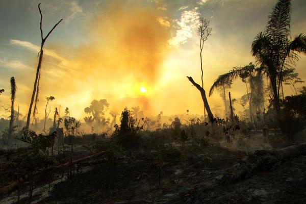 صور غابات الأمازون