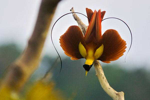 صور طائر جميل