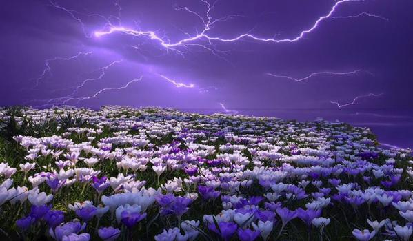 زهور وبرق