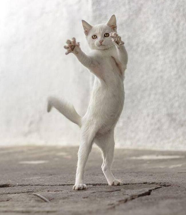 قطة في حركات جميلة