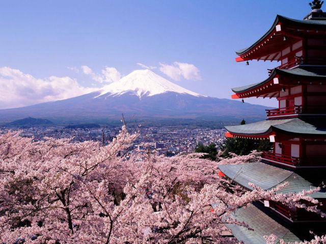أزهار الكرز اليابانية