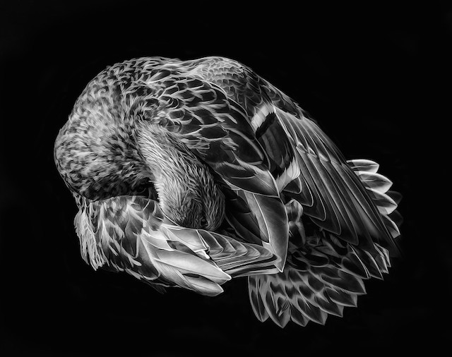 الصور الفائزة بجائزة التصوير الفوتوغرافي عام 2015