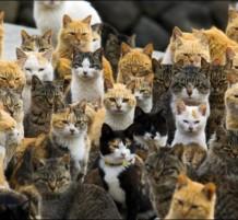Cats Island (2)