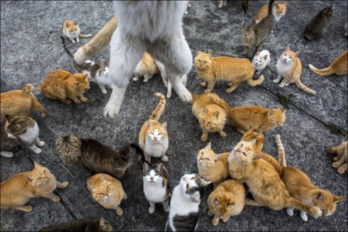Cats Island3
