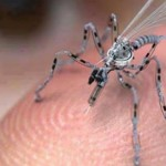 Insect Drones