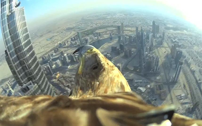 طائر العقاب