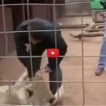 فيديو: مصور يقع بين فكي أسد!