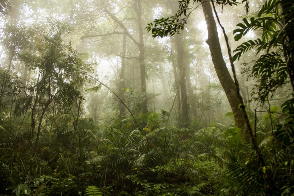 أدغال سومطرة