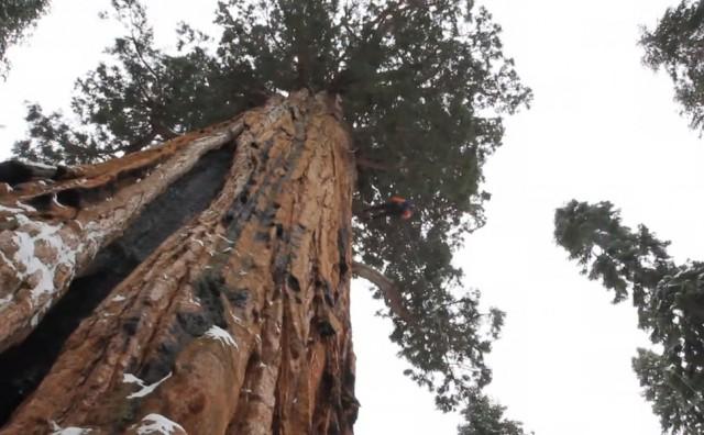 أشجار 2