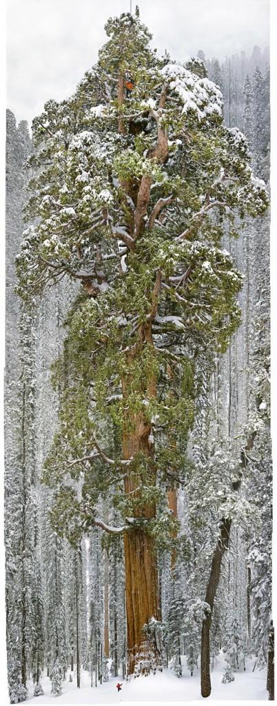 أشجار 6