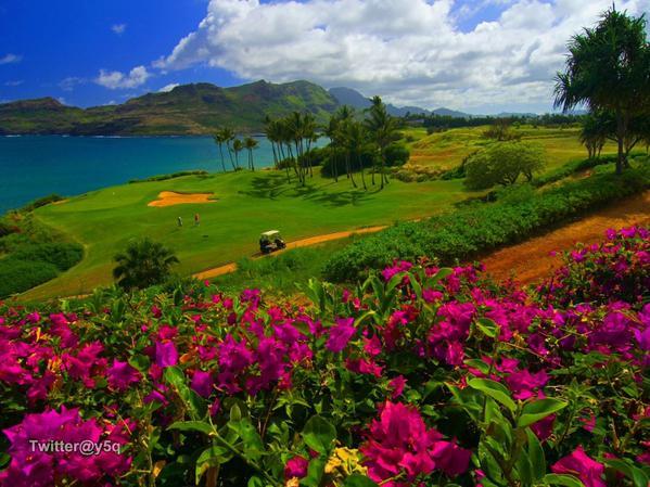 ملعب للجولف في جزيرة كاواي