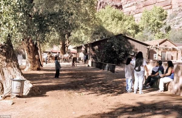 قرية هافاسو3