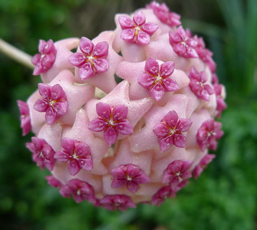 سبحان الله نباتات ذات أشكال هندسية coobra.net
