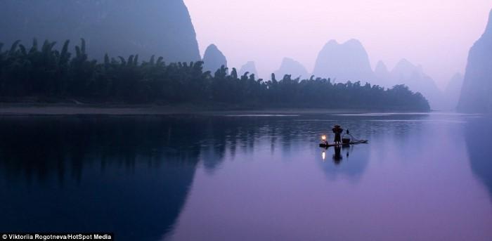 طائر الغاق يساعد الصينيون في صيد الأسماك بطريقة تقليدية قديمة