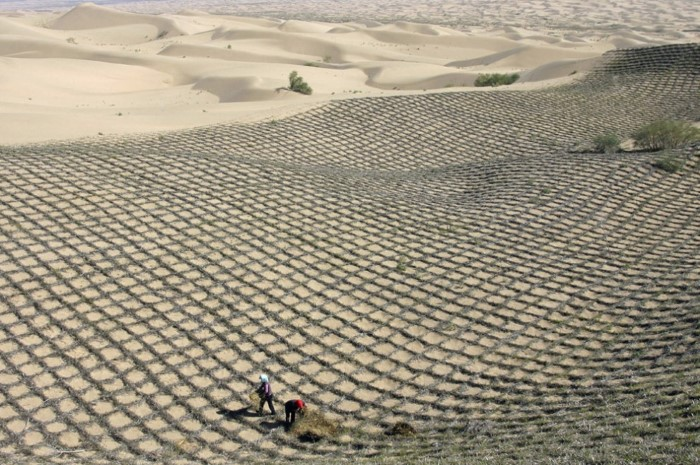عملية زراعة الصحراء