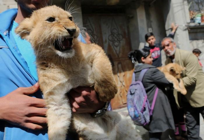 الحيوانات التي تصدرت نشرات الأخبار من حول العالم