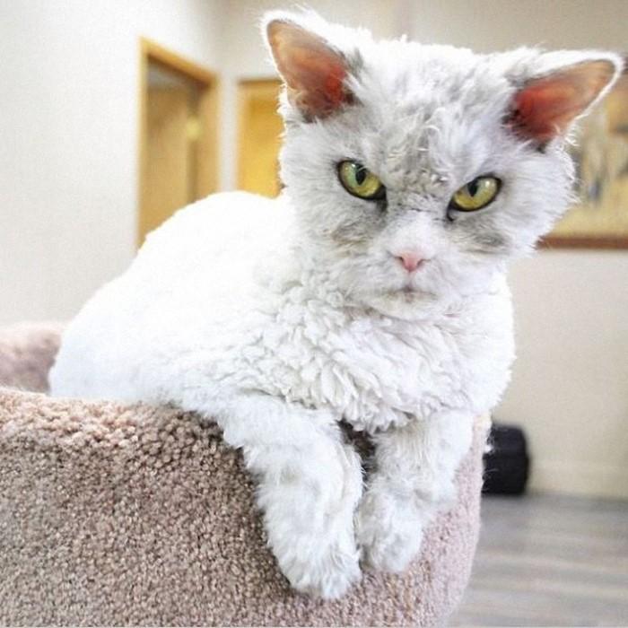 القط الأكثر شراسه على الانترنت