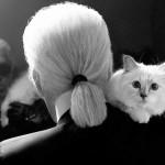 القط كارل
